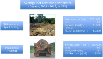 National REDD+ outcompetes gold and logging: The potential of