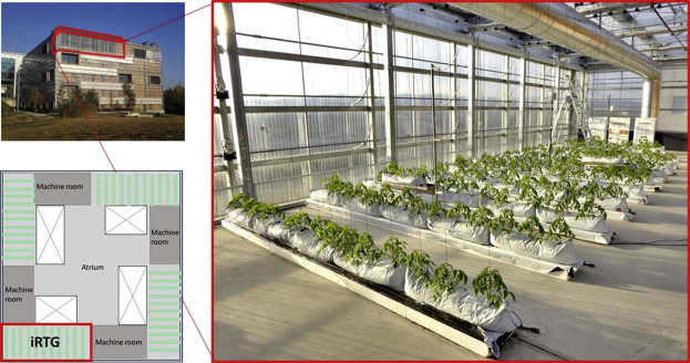 Building-integrated rooftop greenhouses: An energy and