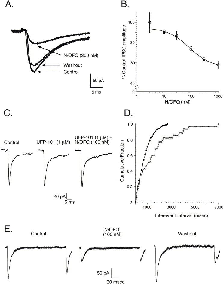 Ofq Inhibits Excitatory And Inhibitory
