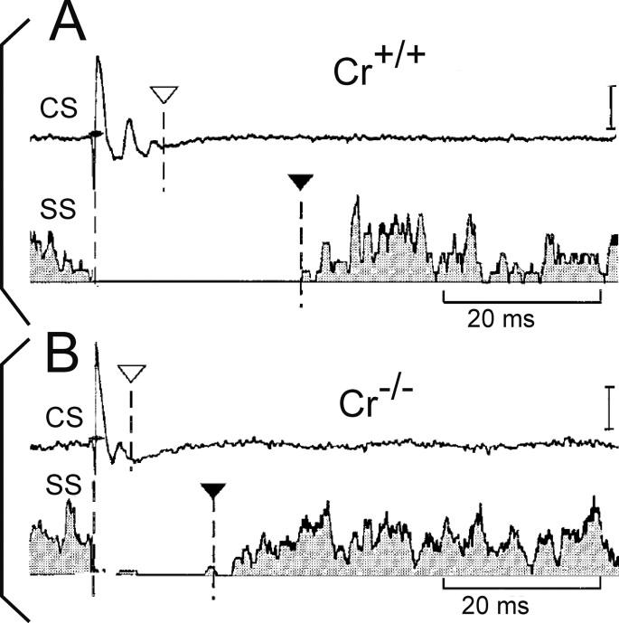 Cerebellar Network Plasticity From Genes To Fast Oscillation