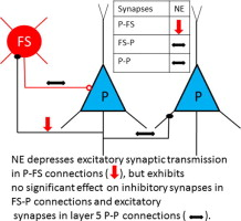 Selective suppression of excitatory synapses on GABAergic