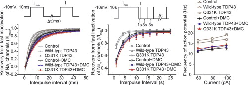 Curcumin abolishes mutant tdp 43 induced excitability in a graphical abstract fandeluxe Image collections
