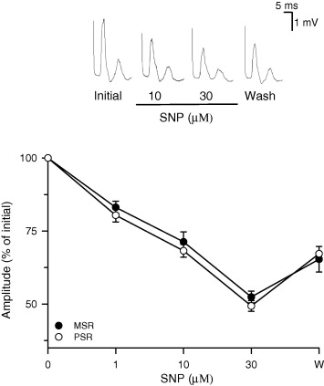 Bisphenol A Depresses Monosynaptic And Polysynaptic Reflexes In