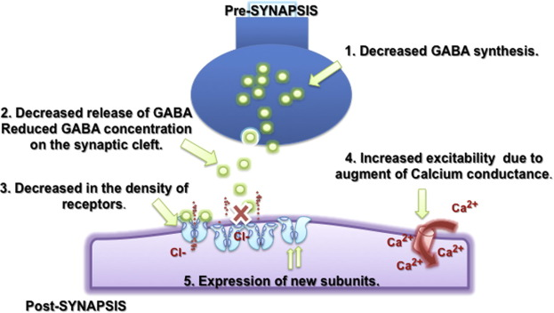 GABA withdrawal syndrome: GABAA receptor, synapse