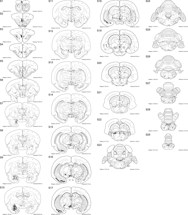 Whole Brain Mapping Of Afferent Projections To The Bed Nucleus Of