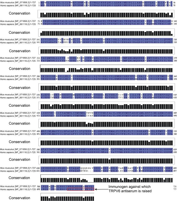 Transient receptor potential vanilloid 6 (TRPV6) in the