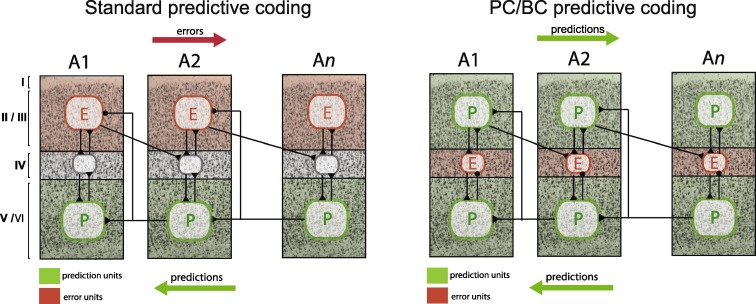 Great Expectations: Is there Evidence for Predictive Coding in