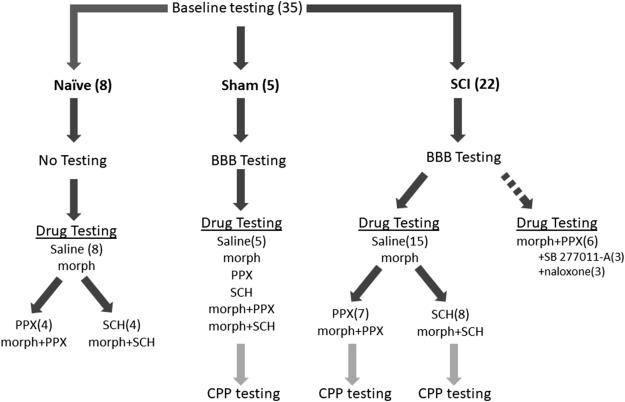 Dopamine D1 and D3 receptor modulators restore morphine ... on