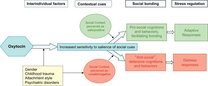 Oxytocin Found To Stimulate Social >> The Role Of Oxytocin In Social Bonding Stress Regulation