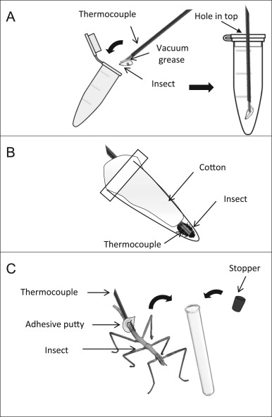 An Invitation To Measure Insect Cold Tolerance Methods Approaches