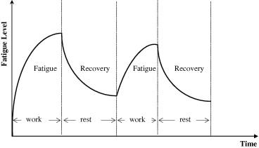 Muscle fatigue recovery time