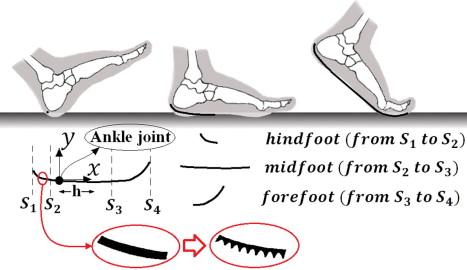 Heel To Toe >> Modelling The Effect Of Heel To Toe Roll Over Contact On