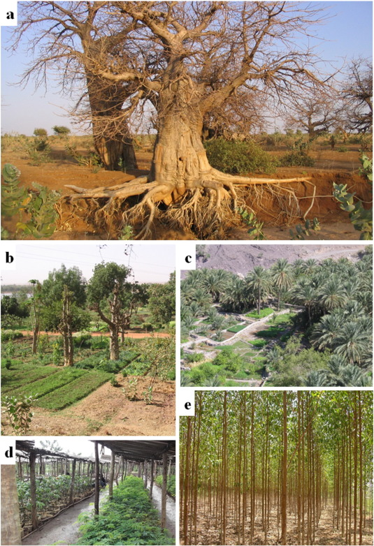 Field-scale modeling of tree–crop interactions: Challenges and