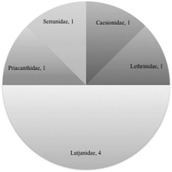Proposed categories of bycatch based on an assessment of