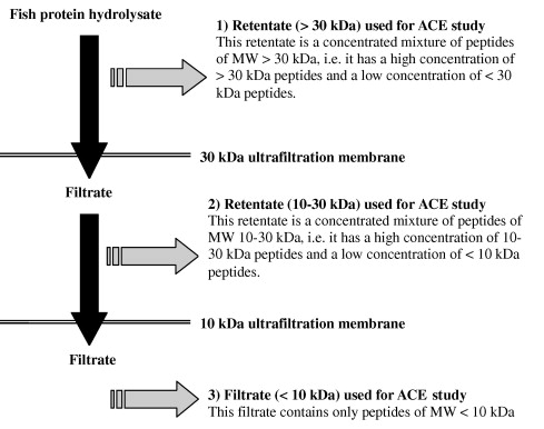 Ace Inhibitory Activity Of Tilapia Protein Hydrolysates Sciencedirect