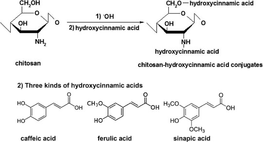 Download Full Size Image Scheme 1 Synthesis Pathway Of Chitosan Hydroxycinnamic Acid