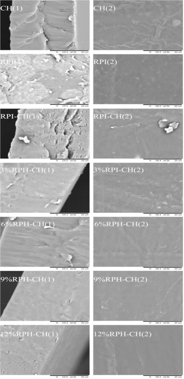 The preparation and physiochemical characterization of