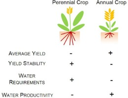 Tradeoffs Between Water Requirements And Yield Stability In Annual Vs Perennial Crops Sciencedirect