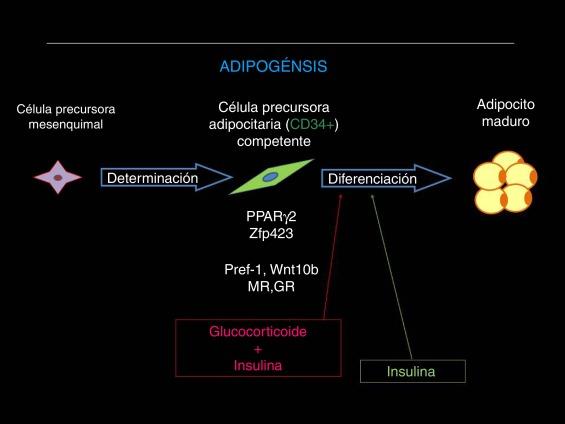 la grasa bloquea los receptores de insulina y la diabetes