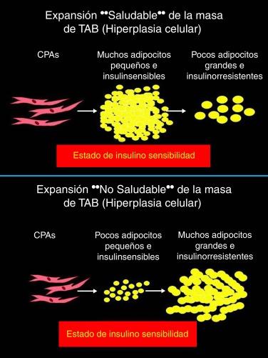 ciclo del ácido citrix explicación fácil de la diabetes