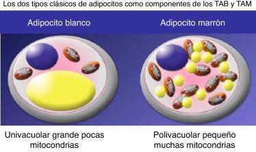 molecola triglicéridos y diabetes