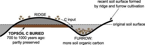 Legacy of medieval ridge and furrow cultivation on soil organic ...