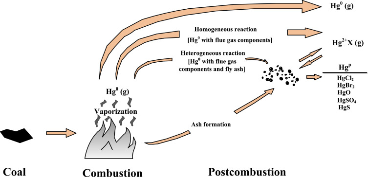 A review on mercury in coal combustion process: Content and