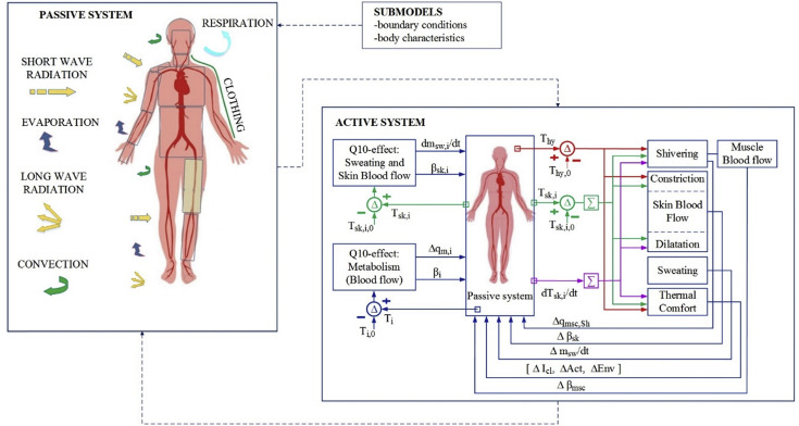 Thermophysiological models and their applications: A review