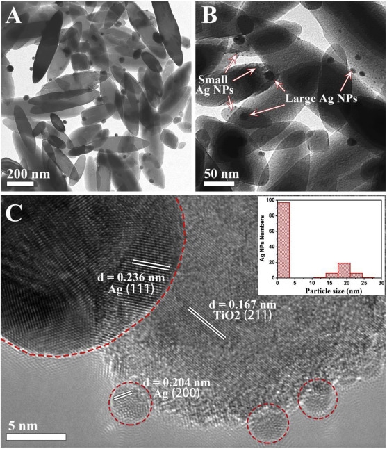 A facile fabrication of hierarchical ag nanoparticles decorated n download high res image 1mb fandeluxe Images