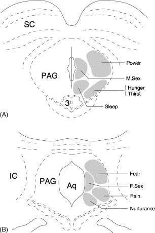 Representations Of Motivational Drives In Mesial Cortex Medial