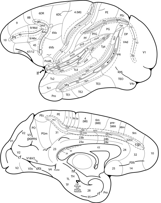 Cytoarchitecture And Cortical Connections Of The Anterior Insula And