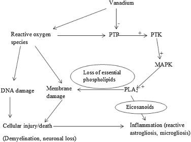 Trends in vanadium neurotoxicity - ScienceDirect