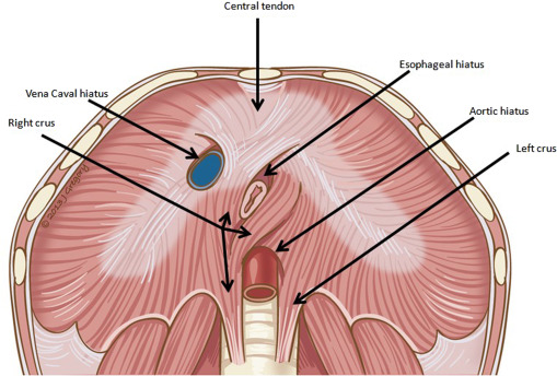 Diaphragm Appearance: A Clue to the Diagnosis of Pulmonary and ...