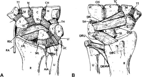 Scapholunate Interosseous Ligament Anatomy And Biomechanics