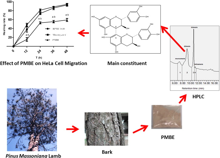 Effects Of Pinus Massoniana Bark Extract On The Adhesion And