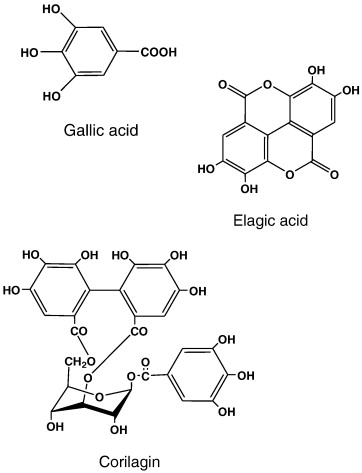 In vitro antifungal activities of longan (Dimocarpus longan