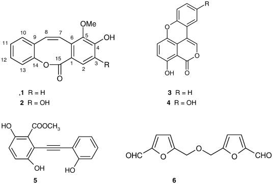allergy medicine chloroquine