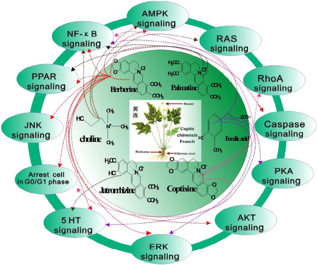 Synergy effects of herb extracts: Pharmacokinetics and