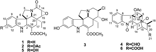 Monoterpenoid indole alkaloids from Alstonia rupestris with