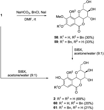 Diversity, pharmacology and synthesis of bergenin and its