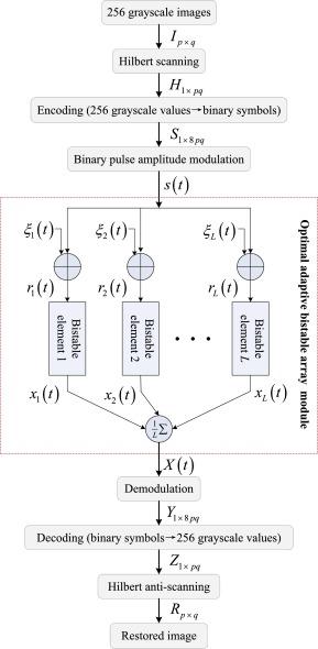Optimum adaptive array stochastic resonance in noisy grayscale image