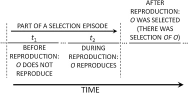 Selection by reinforcement a critical reappraisal sciencedirect fig 2 urtaz Gallery