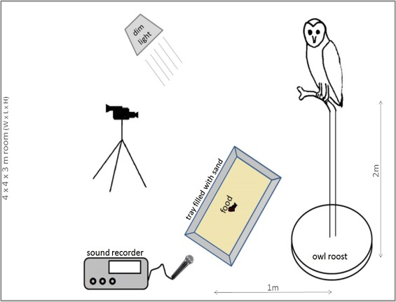 The sounds of silence: Barn owl noise in landing and taking