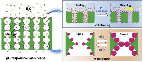 Fabricating a pH-responsive membrane through interfacial in