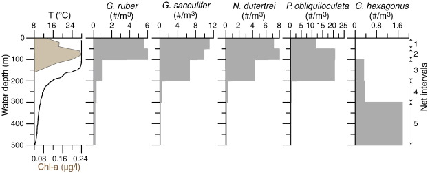 Constraining foraminiferal calcification depths in the western