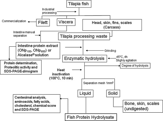 Utilization Of Tilapia Processing Waste For The Production Of Fish