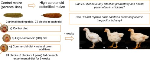 High-carotenoid biofortified maize is an alternative to