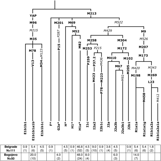 Ancestral modal Y-STR haplotype shared among Romani and South Indian