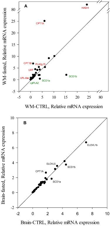 Wide-gene expression analysis of lipid-relevant genes in