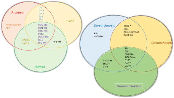 Bacteria vs archaea venn diagram vatozozdevelopment bacteria ccuart Images
